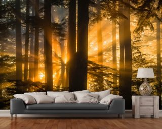 Sunrays Peak Through Fog and Trees Wall Mural Wall Murals Wallpaper