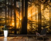 Sunrays Peak Through Fog and Trees mural wallpaper kitchen preview