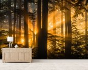 Sunrays Peak Through Fog and Trees mural wallpaper living room preview