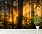 Sunrays Peak Through Fog and Trees mural wallpaper in-room view