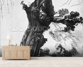 St. Jerome Writing, 1648 (etching) (b/w photo) mural wallpaper living room preview