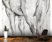 Horses Rear (pencil on paper) (b/w photo) wall mural kitchen preview