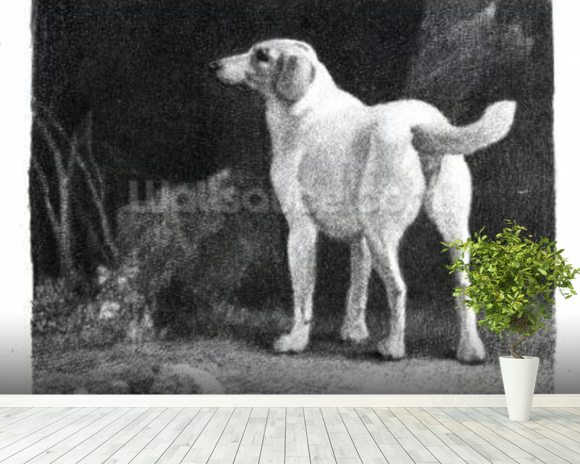 Dog, 1788 (engraving) mural wallpaper room setting