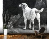 Dog, 1788 (engraving) mural wallpaper kitchen preview