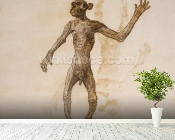 Monkey Standing, Anterior View (pen & ink over graphite on paper) mural wallpaper room setting
