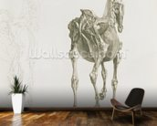 Tab. XV, from The Anatomy of the Horse..., 1766 (engraving) mural wallpaper kitchen preview