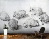 Studies of a Lemur, 1773 (graphite on paper) wall mural kitchen preview