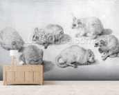 Studies of a Lemur, 1773 (graphite on paper) wall mural living room preview