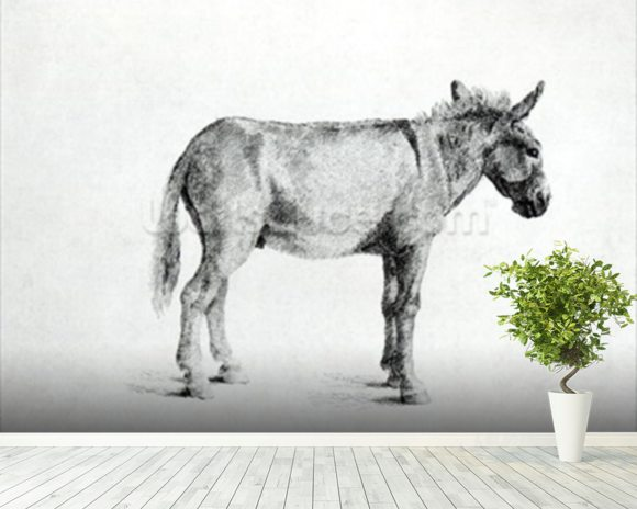 Donkey 1766 (pen and ink on paper) (b/w photo) mural wallpaper room setting