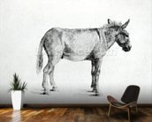 Donkey 1766 (pen and ink on paper) (b/w photo) mural wallpaper kitchen preview
