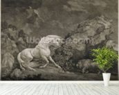 A Horse Affrighted by a Lion, engraved by the artist (etching) mural wallpaper in-room view
