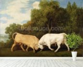 Bulls Fighting, 1786 (oil on panel) wall mural in-room view