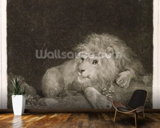 A Lion (A Recumbent Lion) engraved by the artist, pub. 1788 (etching) mural wallpaper