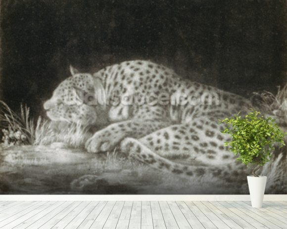 A Tyger (A Sleeping Cheetah) (mezzotint) wallpaper mural room setting
