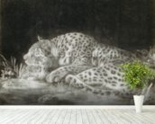 A Tyger (A Sleeping Cheetah) (mezzotint) wallpaper mural in-room view