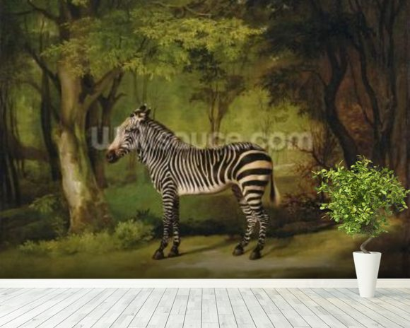 A Zebra, 1763 (oil on canvas) wall mural room setting