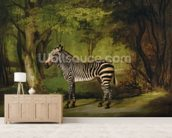 A Zebra, 1763 (oil on canvas) wall mural living room preview