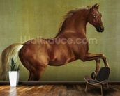 Whistlejacket, 1762 mural wallpaper kitchen preview