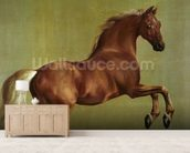 Whistlejacket, 1762 mural wallpaper living room preview