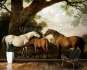 Two Shafto Mares and a Foal, 1774 (oil on panel) mural wallpaper kitchen preview