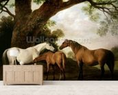 Two Shafto Mares and a Foal, 1774 (oil on panel) mural wallpaper living room preview