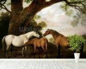 Two Shafto Mares and a Foal, 1774 (oil on panel) mural wallpaper in-room view