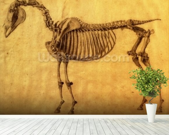 Finished Study for the First Skeletal Table of a Horse, c. 1766 (graphite on paper) wallpaper mural room setting
