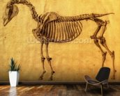 Finished Study for the First Skeletal Table of a Horse, c. 1766 (graphite on paper) wallpaper mural kitchen preview