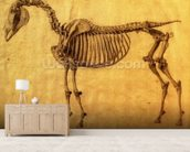Finished Study for the First Skeletal Table of a Horse, c. 1766 (graphite on paper) wallpaper mural living room preview