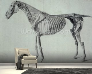 Finished Study for the Fifth Anatomical Table of a Horse (graphite on paper) mural wallpaper