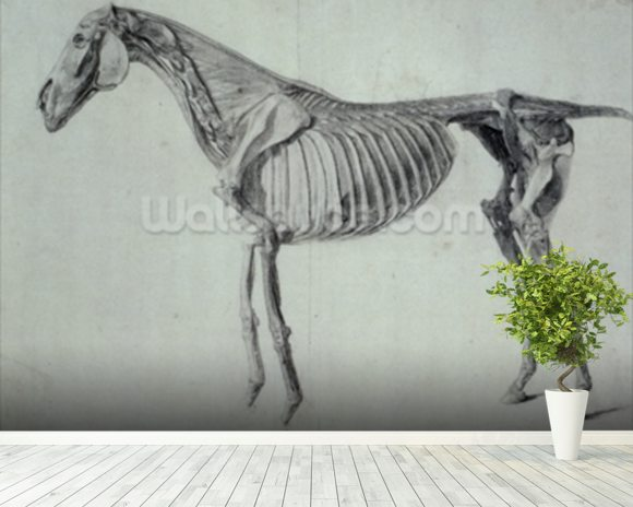 Finished Study for the Fifth Anatomical Table of a Horse (graphite on paper) mural wallpaper room setting