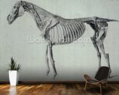 Finished Study for the Fifth Anatomical Table of a Horse (graphite on paper) mural wallpaper kitchen preview