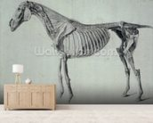 Finished Study for the Fifth Anatomical Table of a Horse (graphite on paper) mural wallpaper living room preview