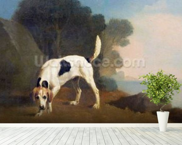 Foxhound on the Scent, c.1760 (oil on paper laid on board) wall mural room setting