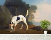 Foxhound on the Scent, c.1760 (oil on paper laid on board) wall mural in-room view