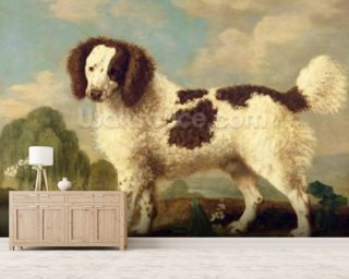 Brown and White Norfolk or Water Spaniel, 1778 (oil on panel) wall mural