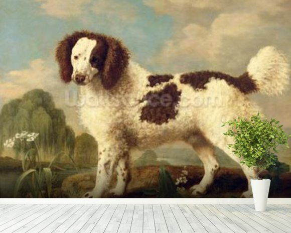 Brown and White Norfolk or Water Spaniel, 1778 (oil on panel) wall mural room setting