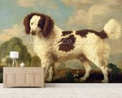 Brown and White Norfolk or Water Spaniel, 1778 (oil on panel) wall mural living room preview