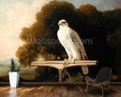 Greenland Falcon (Grey Falcon), 1780 (oil on panel) wall mural kitchen preview