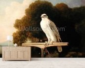 Greenland Falcon (Grey Falcon), 1780 (oil on panel) wall mural living room preview