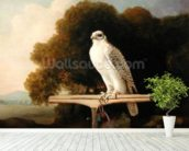 Greenland Falcon (Grey Falcon), 1780 (oil on panel) wall mural in-room view