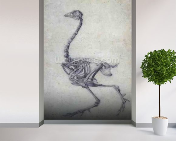 The Skeleton of a Fowl, from the series A Comparative Anatomical Exposition of the Structure of the Human Body with that of a Tiger and a Common Fowl, 1795-1806 (graphite on paper) wall mural room setting