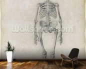 The Human Skeleton, anterior view, from the series A Comparative Anatomical Exposition of the Structure of the Human Body with that of a Tiger and a Common Fowl, 1795-1806 (graphite on paper) wallpaper mural kitchen preview