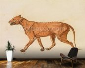 Tiger, Lateral View, Skin Removed, from A Comparative Anatomical Exposition of the Structure of the Human Body with that of a Tiger and a Common Fowl (red chalk and ink on paper) wall mural kitchen preview
