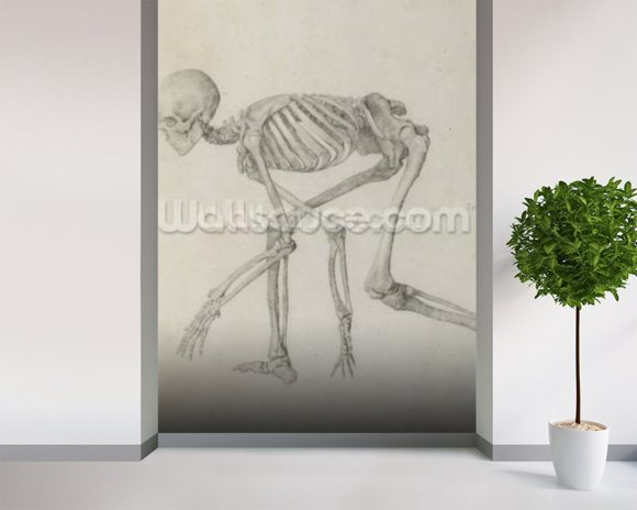 Human Skeleton: Lateral view in Crouching Posture, from the series A Comparative Anatomical Exposition of the Structure of the Human Body with that of a Tiger and a Common Fowl (graphite on paper) mural wallpaper room setting