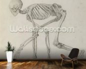 Human Skeleton: Lateral view in Crouching Posture, from the series A Comparative Anatomical Exposition of the Structure of the Human Body with that of a Tiger and a Common Fowl (graphite on paper) mural wallpaper kitchen preview