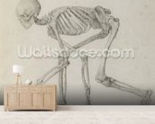 Human Skeleton: Lateral view in Crouching Posture, from the series A Comparative Anatomical Exposition of the Structure of the Human Body with that of a Tiger and a Common Fowl (graphite on paper) mural wallpaper living room preview