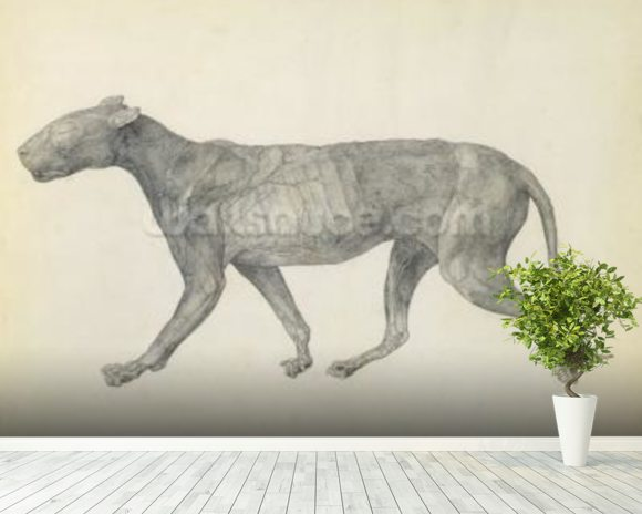 Tiger: Lateral View, with Skin and Tissue Removed, from the series A Comparative Anatomical Exposition of the Structure of the Human Body with that of a Tiger and a Common Fowl (graphite on paper) wall mural room setting