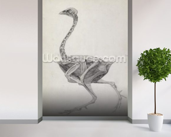 Fowl: Lateral View, Deeply Disecting, from the series A Comparative Anatomical Exposition of the Structure of the Human Body with that of a Tiger and a Common Fowl (graphite on paper) mural wallpaper room setting