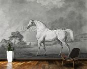 Mambrino, engraved by George Townley Stubbs (1756-1815) pub. 1794 (etching) wallpaper mural kitchen preview